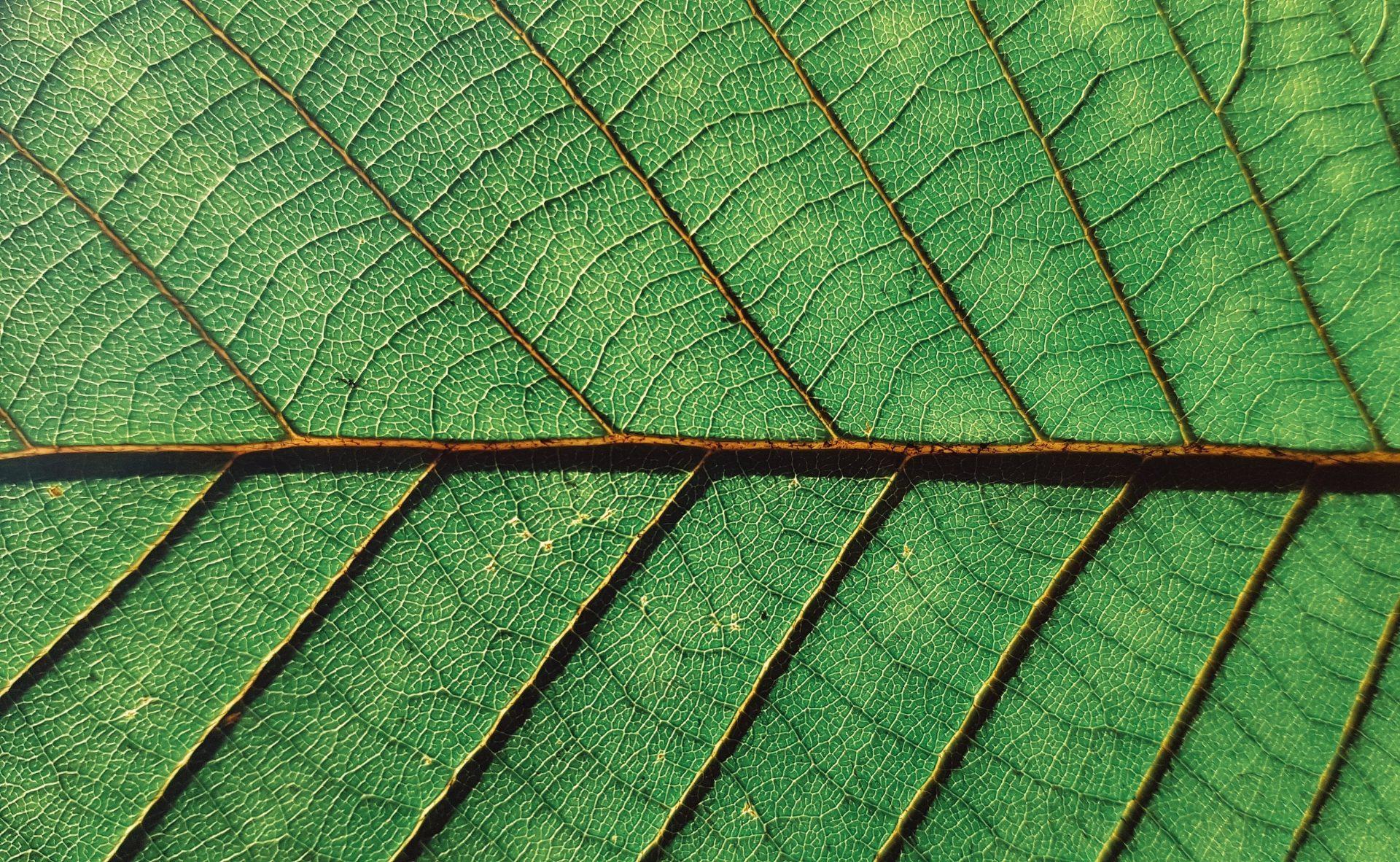 Bild av förstoring av ett löv.